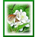 butterfly flower insect
