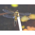 Insects Annimals Dragonfly