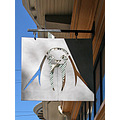 sign hangingsignfph walrus bluesky reflections