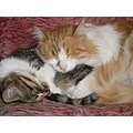 cat pet animals friends sweet dreams together