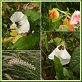 Flowers bee collage