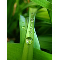 RAIN DROPS GREEN WATER MACRO
