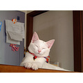 cat whitecat Kuppy kitty Miaw Niigata Japan award
