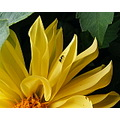 Flower Ant Yellow Black Insect Plant Nature