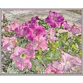 Pot of Petunias using similar technique as the previous posting.