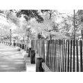 tree wood perspective park nyc bw fence light shadow