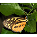 stlouis missouri us usa animal butterfly butterfly_house macro 110808 2008