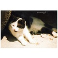only The Cat (she lives in the park site in front of my block of flats:) is happy about the hot w...