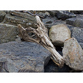 We found the dragon's skull among the rocks of the bay.