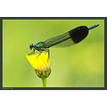 A short break from birds :-)