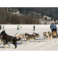 this are pics from a friend. Big fun for the dogs in Einsiedeln Switzeland.