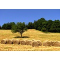 field nature summer France tree hay straw haystack
