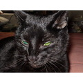 black cat greeneyes