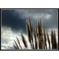 pampass grass sky clouds dramatic wild nature somerset somersetdreams