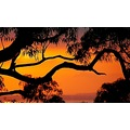 sunrise dawn Australia orange