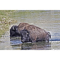 Yellowstone Landscapes NationalParks Wildlife