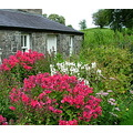 cottage castlebar flowers pretty museum Mayo Ireland
