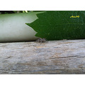 little aracnida web spider