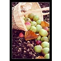 Autumn Fall Apples Basket Fruit Gren Red
