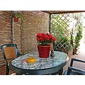 smoking flower garden terrace home andalucia spain