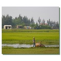 vietnam vinh people animal landscape vietx vinhx animx landv viewv peopx