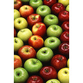 apples colorful