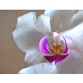 orchid flower plant green environment garden home beautiful lovely macro white