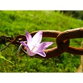flower fence rusty macro autumn october France nature countryside