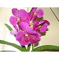 flowers pink green orchids