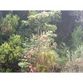 Madeira island Portugal nature wild flowers 2006 white tree folhado