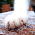 cat frost ice cold england paw