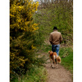 gorse dog man walk