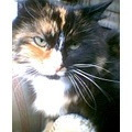 Cats Cute Torties Tortoiseshell