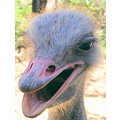 Animals Wildlife macro emu birds