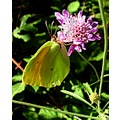 butterfly corsica exotic camouflage probosis insect macro