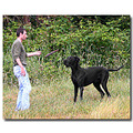 Dogs Dog Greatdane