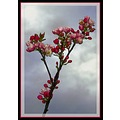branch bloom fruit blossom apple bud flower sky
