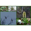 A springcollage from my walks in the weekend.... last night it has been freezing again...;-( 