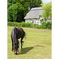 New forest pony thatched cottage
