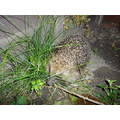 Hedgehog in garden how lucky was i