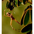 insect spider reserve nature casa imagine wild alora malaga spain adalucia uni