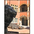 lion hippopotamus animals architecture Lyon France april