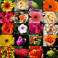 stlouis missouri us usa plant flower macro collage GardenFriday FunFriday 032009