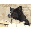 ftmeeting marazion dog cornwall