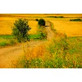 summer nature scenery area lane Poland Silesia