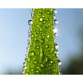 grass dew drop macro sunrise