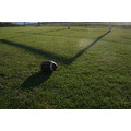 football balls shadow grass field cool