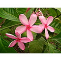 flower flowers shrubs nature flores flor brazil