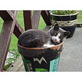 Cat crazy flower pot