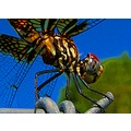 insects dragonfly macro